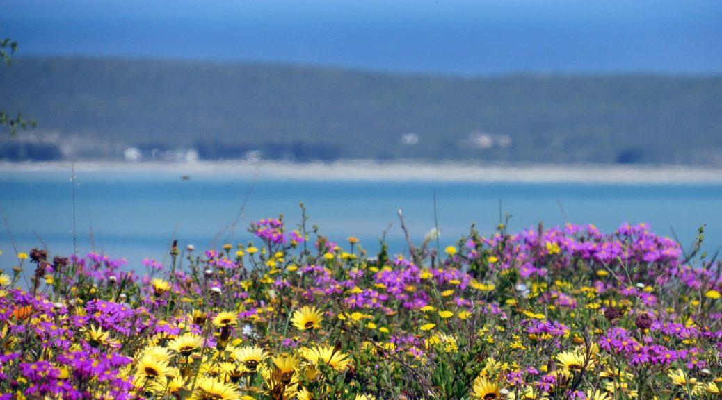 Lagoon Flowers
